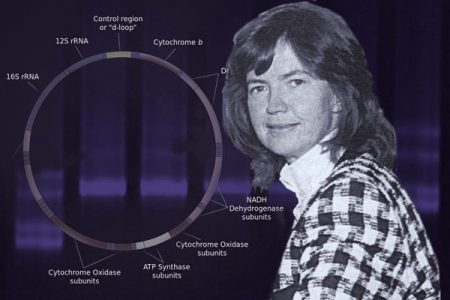 Anita Harding, Co-discoverer of mitochondrial DNA mutation in human disease and of the concept of tissue heteroplasmy of mutant mitochondrial DNA.